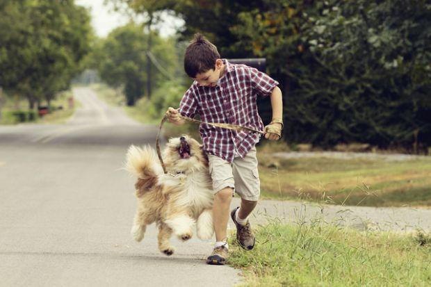 Help Animal Shelter